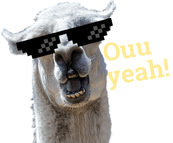 llama with turn down for what glasses hispanic memes in digital marketing pm3 agency